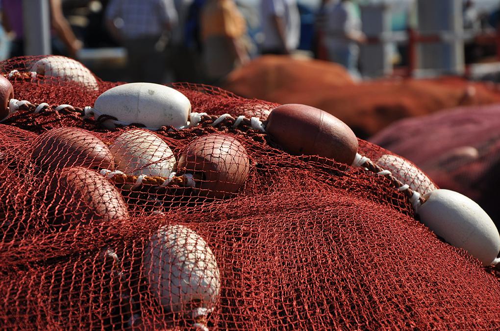 La pêche professionnelle